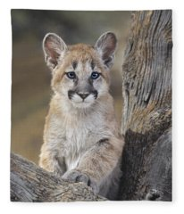 Mountain Lion Cub Fleece Blanket