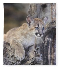 Mountain Lion Cub On Tree Branch Fleece Blanket