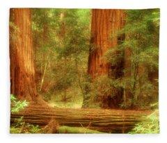 Muir Woods, Trees, National Park Fleece Blanket