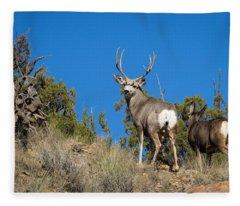 Mule Deer Buck Fleece Blanket