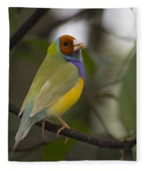 Multicolored Beauty Fleece Blanket