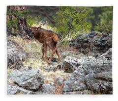Newborn Elk Calf Fleece Blanket