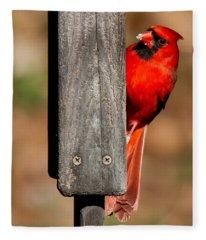 Northern Cardinal Fleece Blanket