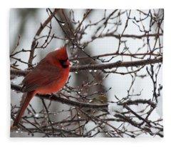 Northern Red Cardinal In Winter Fleece Blanket