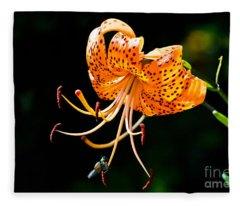 Orange Lily - Lilium Kelleyanum Fleece Blanket