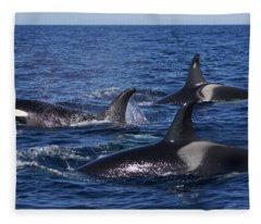 Orca Pod Surfacing Off Hokkaido  Fleece Blanket