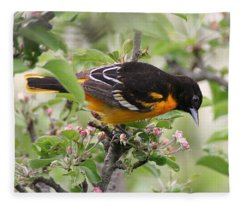 Oriole With Apple Blossoms Fleece Blanket
