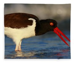 Oystercatcher In Surf Fleece Blanket