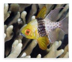 Pajama Cardinalfish Bali Indonesia Fleece Blanket