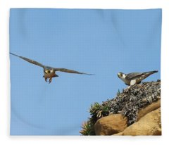 Peregrine Falcons - 1 Fleece Blanket