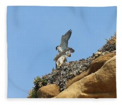 Peregrine Falcons - 3 Fleece Blanket