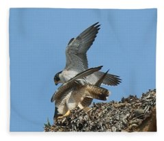 Peregrine Falcons - 4 Fleece Blanket