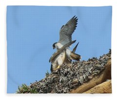 Peregrine Falcons - 5 Fleece Blanket