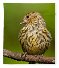Pine Siskin With Yellow Coloration Fleece Blanket