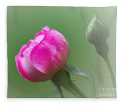 Pink Rose And Raindrops Fleece Blanket