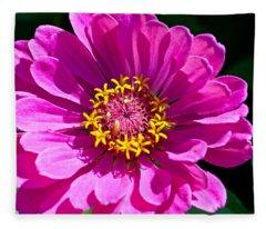 Pink Zinnia Fleece Blanket