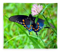 Pipevine Swallowtail Hanging On Fleece Blanket