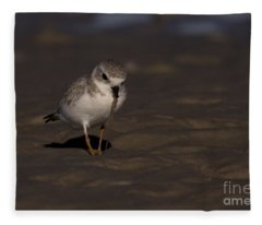 Piping Plover Photo Fleece Blanket