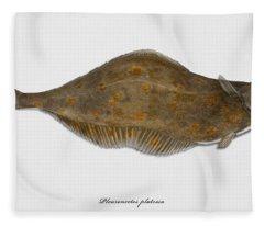 Plaice Pleuronectes Platessa - Flat Fish Pleuronectiformes - Carrelet Plie - Solla - Punakampela Fleece Blanket