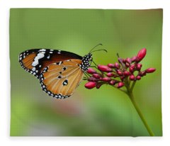 Plain Tiger Or African Monarch Butterfly Dthn0008 Fleece Blanket