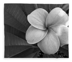 Plumeria With Raindrops Fleece Blanket