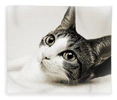 Precious Kitty Fleece Blanket