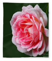 Pretty Pink Rose Fleece Blanket