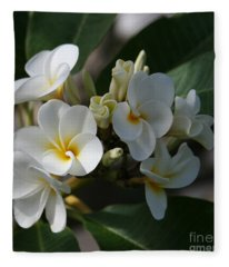 Pua Melia Na Puakea Onaona Tropical Plumeria Fleece Blanket