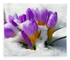 Purple Crocuses In The Snow Fleece Blanket
