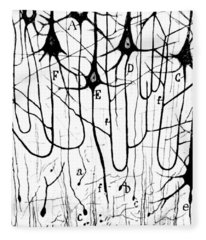 Pyramidal Cells Illustrated By Cajal Fleece Blanket