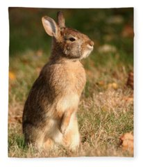 Rabbit Standing In The Sun Fleece Blanket