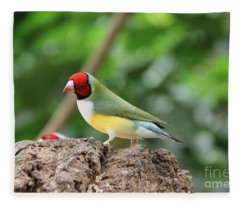 Red Headed Gouldian Finch Fleece Blanket