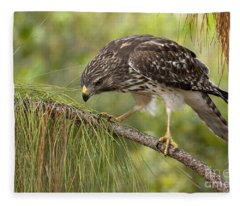 Red Shouldered Hawk Photo Fleece Blanket