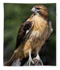 Red Tail Hawk Portrait Fleece Blanket