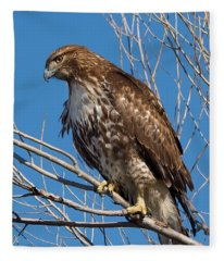 Red-tailed Hawk Watching The Ducks Fleece Blanket