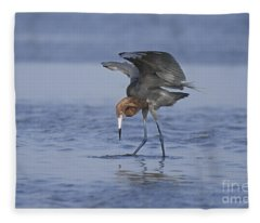 Reddish Egret Fishing Texas Fleece Blanket