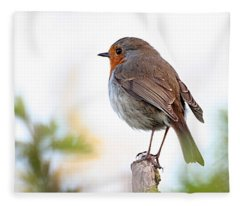 Robin On A Pole Fleece Blanket