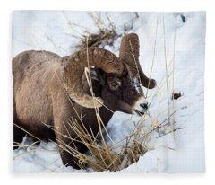 Rocky Mountain Bighorn Sheep Fleece Blanket
