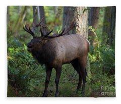 Roosevelt Elk Bugling Fleece Blanket