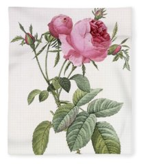 Rosa Centifolia Foliacea Fleece Blanket