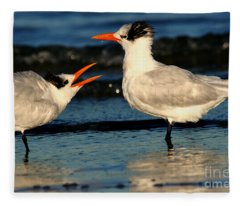 Royal Tern Courtship Dance Fleece Blanket
