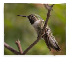 Rufous Hummingbird Fleece Blanket
