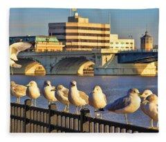 Seagulls In Downtown Toledo 9159 Fleece Blanket