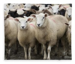 Sheep In A Farm Yard Fleece Blanket