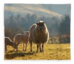 Sheep In Pasture Fleece Blanket