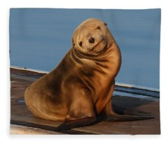 Shy Sea Lion Pup  Fleece Blanket