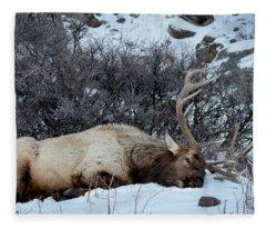 Sleeping Elk Fleece Blanket