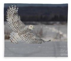 Snowy Owl In Flight Fleece Blanket