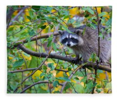 Spokane Raccoon Fleece Blanket