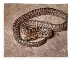 Spotted Python Antaresia Maculosa Fleece Blanket
